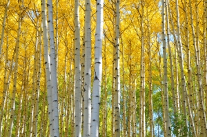 Check out some amazing fall-color photos by Kit Frost, owners of Chase the Light Photography Adventures in Durango, Colorado. (Copyright Kit Frost.)
