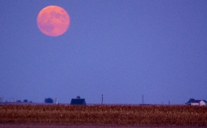Corn beneath a full Corn Moon.