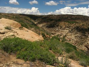 Enjoy the Wetherill Mesa Experience at Mesa Verde National Park.