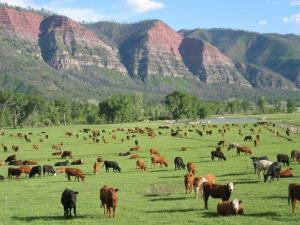 Now, these are happy cows.(Photo by James Ranch.)