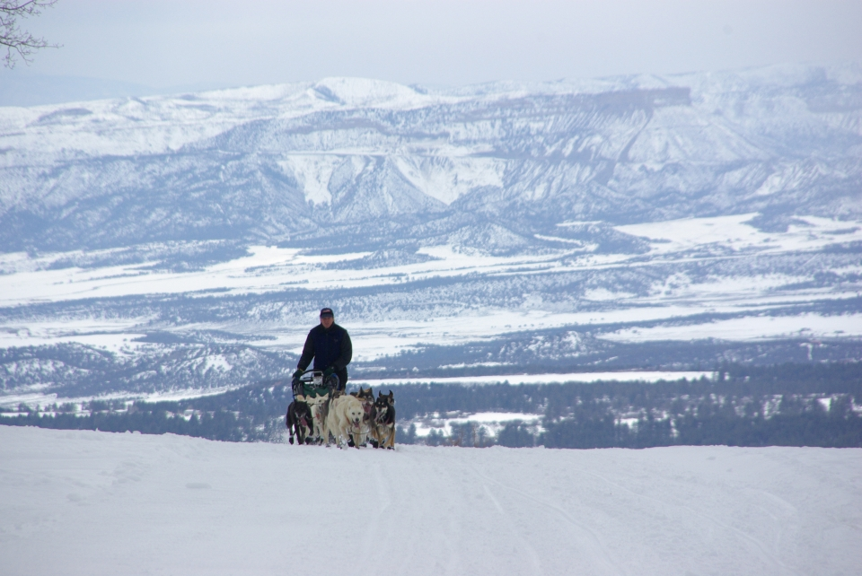 Durango Dog Ranch_dog sled rides